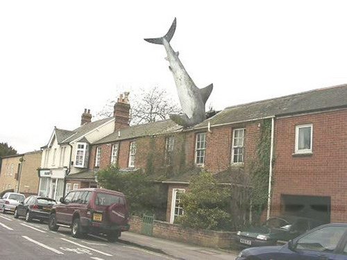 shark-in-the-roof.jpg