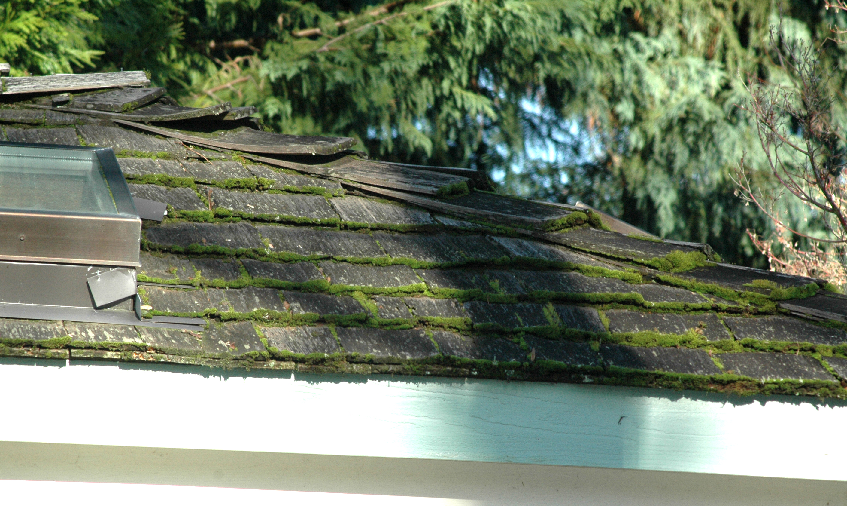 roof_moss_buildup_on_ends_dsc_0147.jpg